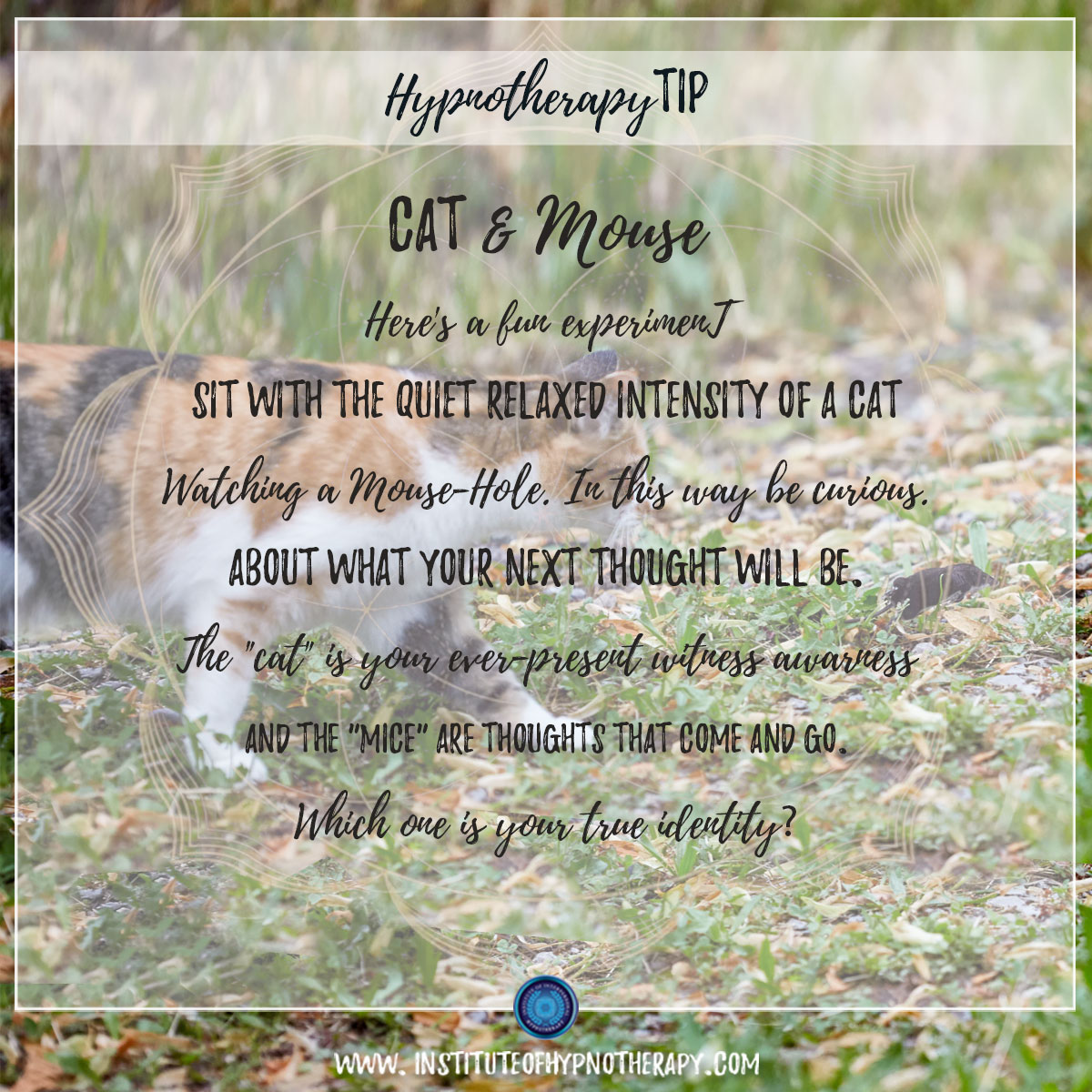 Hypnotherapy Tip : Cat & Mouse